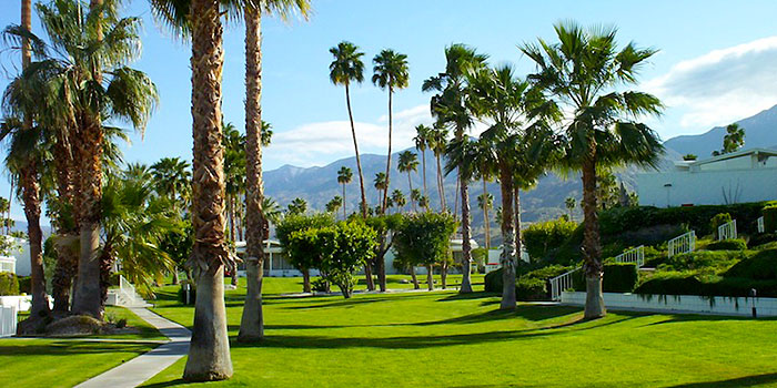 Canyon View Estates Complex Palm Springs Real Estate